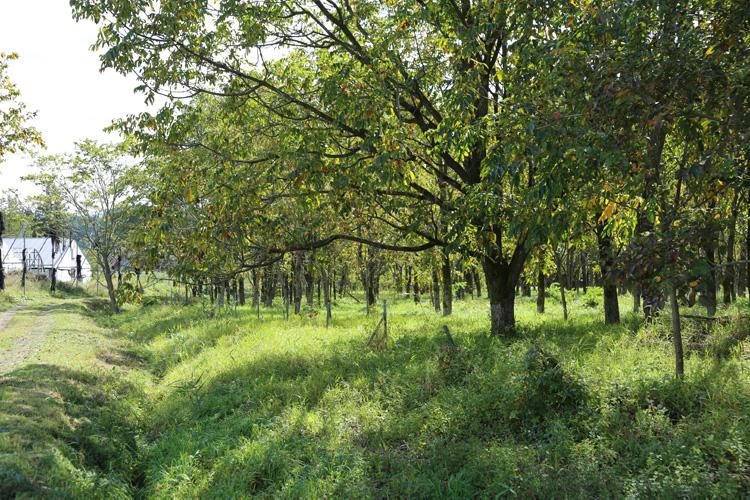残暑の残る木洩れ日
