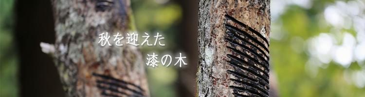秋を迎えた漆の木